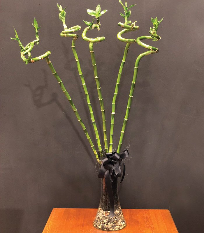 5 Adet Bambu