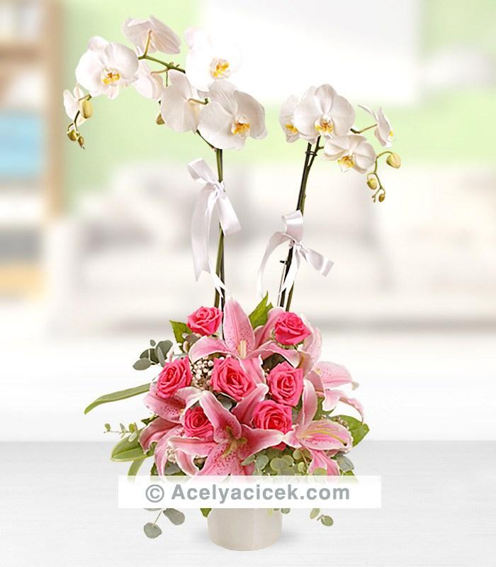 2 Orkideli Aranjman