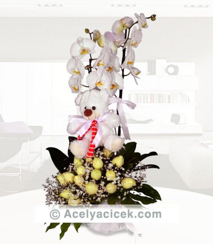 Orkide Şöleni