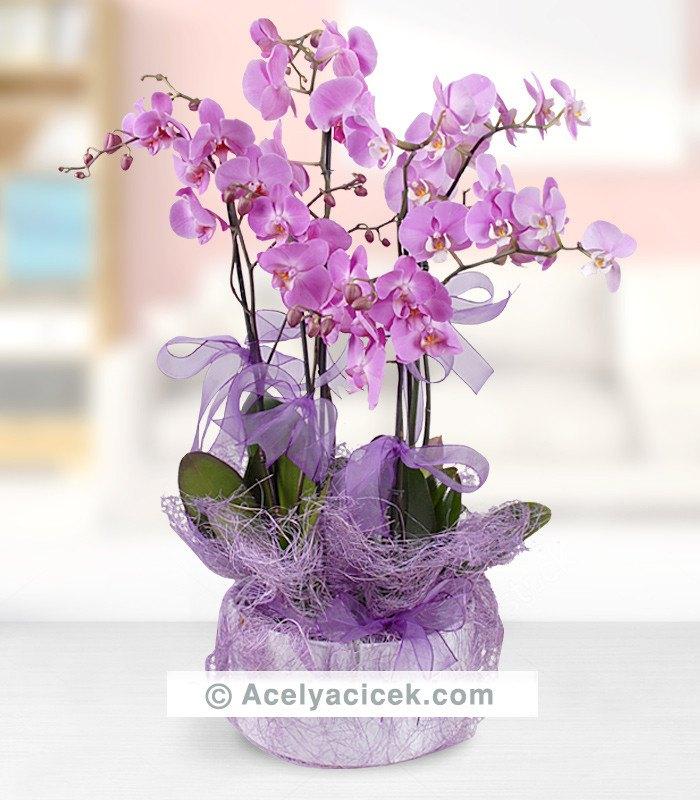 5 Dal Mor Orkidenin Şıklığı