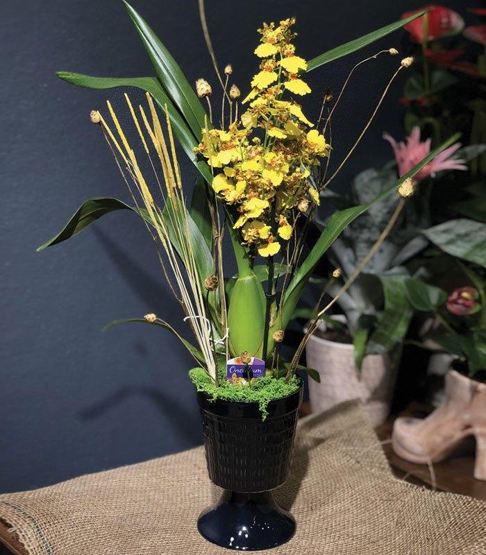 Sarı Benekli Orkide