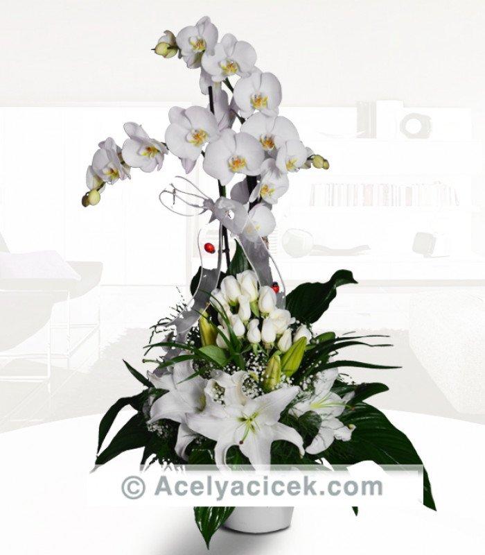 Beyazın Orkide Çiçeğiyle Buluşması