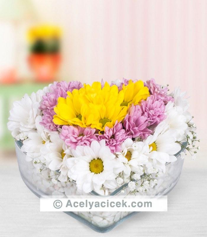 Renkli Bahar Çiçekleri