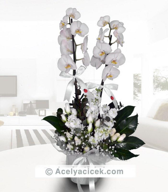 Çift Dallı Beyaz Orkide Süslemesi