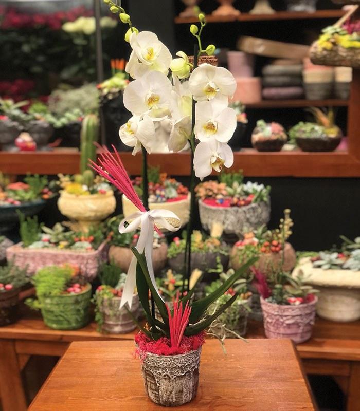 2 Dallı Beyaz Orkide Çiçeği