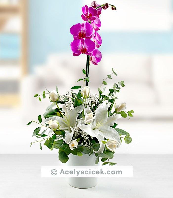 Orkide Çiçeği Aranjmanı